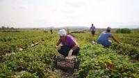 Фермеры смогут строить жилье на землях сельхозназначения
